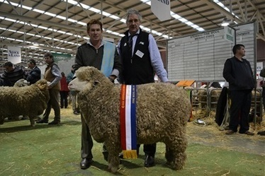 Roseville Park's hat trick - The Land Newspaper   Sheep and Wool   Scoop.it