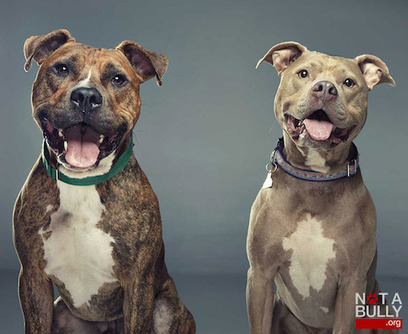 """Heartwarming Photos and Stories of """"Bully"""" Breeds That Dispel the Bad Dog Myth 