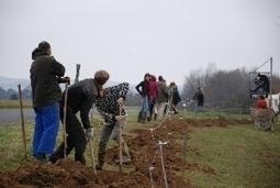 Participez à l'action solidaire « Fruits pour tous »... à l'atelier de poterie La Terre en Feu de Valojoulx | CRDVA 24 | Scoop.it