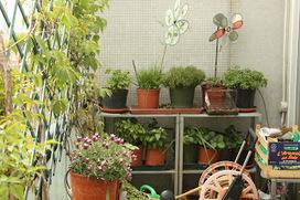 Orto sul balcone coltivare l 39 insalata in casse for Coltivare more in vaso