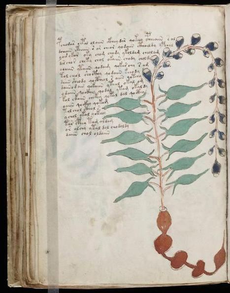 The Voynich Manuscript | books, manuscripts and old prints | Scoop.it