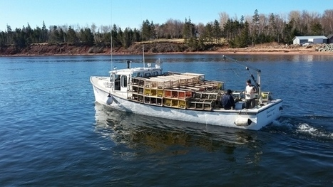 'It was a beautiful day': Lobster fishermen optimistic as season gets underway | Nova Scotia Fishing | Scoop.it