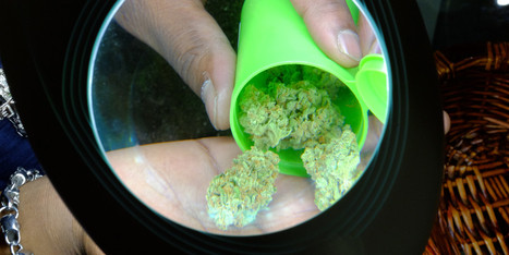 Uruguay Considers Giving Medical Marijuana To Cocaine Addicts | Beckley News : Cannabis - Marijuana | Scoop.it