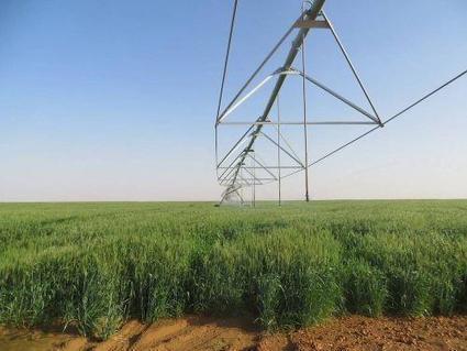 Les 5 pays africains qui cèdent le plus leurs terres aux investisseurs étrangers, selon Thinking Africa   Enjeux agricoles contemporains   Scoop.it