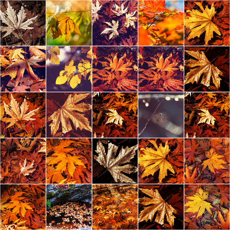 Fall into Fall with These Seasonal STEM Activities | Homework Helpers | Scoop.it