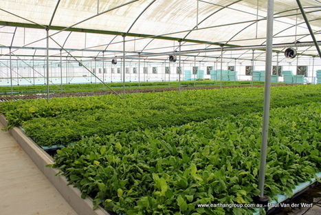 Struggling with Aquaponics? - Earthan Group Pty Ltd | Aquaponics World View | Scoop.it