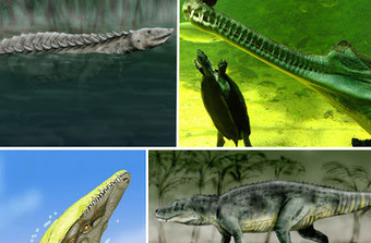 Huge Croc Extinction Led to Dinosaur Domination ~ Interesting Facts You Should Know   Every Thing Around the World   Scoop.it