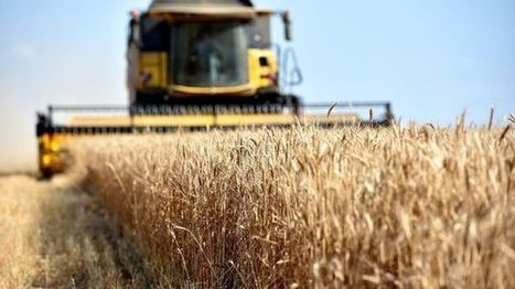 Dans la Marne, les céréaliers voient rouge en attendant les aides du gouvernement | L'actu agricole dans la Marne et la région | Scoop.it