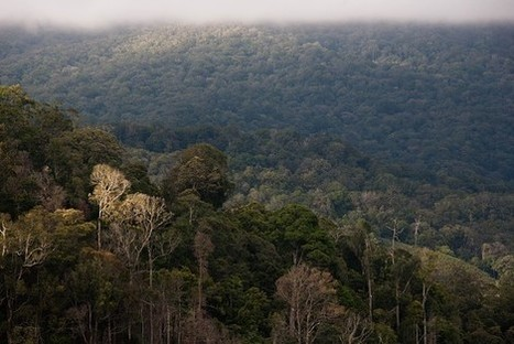 Prized Forest in Aceh Threatened by Development, Activists Say | Orangutan Land Trust | Scoop.it
