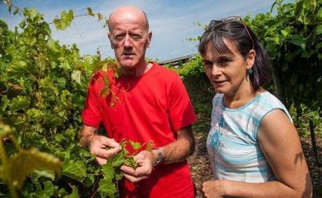 «Nous connaissons toujours mal le phylloxéra de la vigne» - 20minutes.fr | BTS VO1 | Scoop.it
