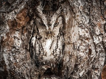 Okefenokee Swamp Photo -- Screech Owl Wallpaper -- National Geographic Photo of the Day | Great Pics | Scoop.it