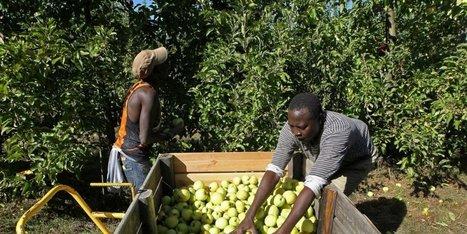 Dordogne : on cherche de la main d'oeuvre, d'urgence, pour récolter les pommes | Agriculture en Dordogne | Scoop.it