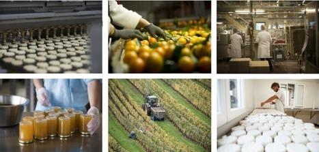 Le panorama des industries agroalimentaires 2016 | Veille Scientifique Agroalimentaire - Agronomie | Scoop.it