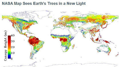 JPL - NASA Map Sees Earth's Trees in a New Light | GIS in Education | Scoop.it