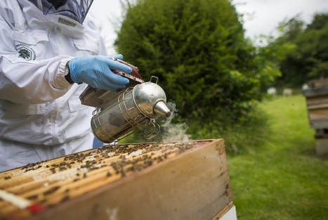 The latest Brexit buzz is about the fate of England's honeybees | Sustain Our Earth | Scoop.it