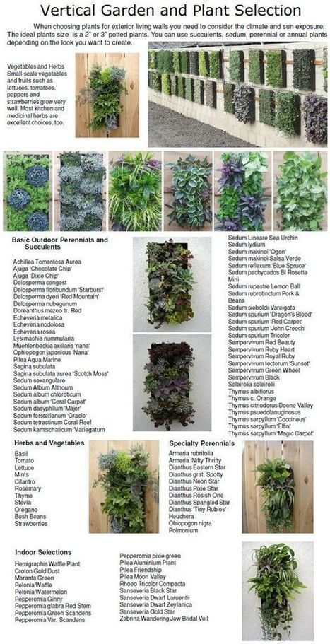 Vertical garden | Astuces au jardins | Scoop.it