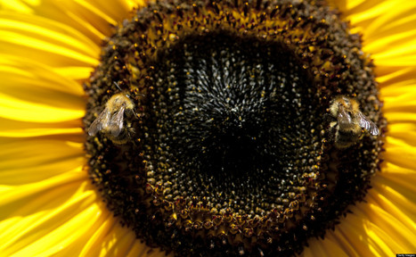 Why Pollen Allergies May Only Get Worse | Sustain Our Earth | Scoop.it