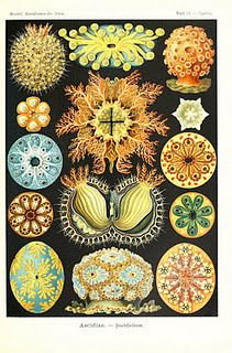 Biodiversity Heritage Library: Book of the Week: Bridging the Gap Between Science & Art | Herbaria | Scoop.it