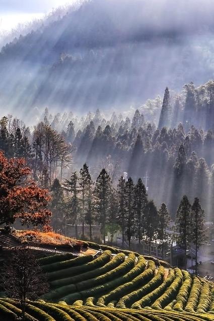 wallflower thoughts; • tect0nic: Wonderful morning by Tiger Seo via... | Marketing Digital | Scoop.it