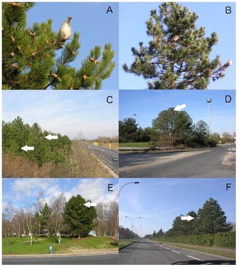Google Street View pour évaluer la répartition de la chenille processionnaire du pin [en anglais] | EntomoNews | Scoop.it