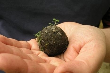 Seed Bombing : végétaliser les villes avec des bombes végétales | Energies pour la transition | Scoop.it
