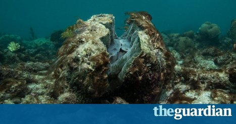 The Guardian view on the Great Barrier Reef: the crisis they prefer to downplay | SteveB's Politics & Economy Scoops | Scoop.it