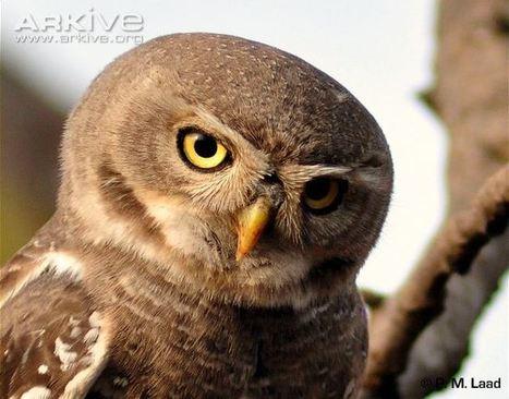 ARKive blog Superstitions in nature -   Birding in the news   Scoop.it