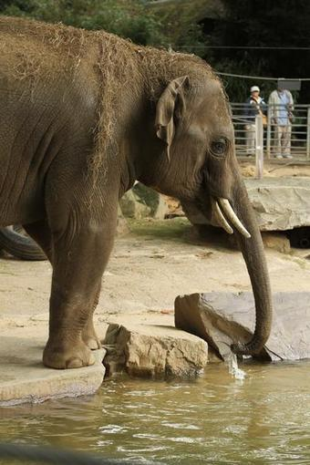 guest commentary Zoos not the places for elephants - Denver Post | Most romantic Places | Scoop.it