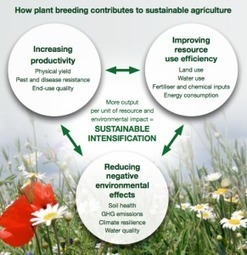 Plant breeding for sustainable agriculture | Agricultural Biodiversity | Scoop.it