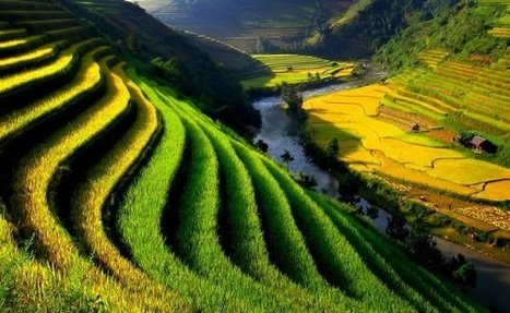 Top 7 reasons to plan for Vietnam Holidays | Travel | Scoop.it
