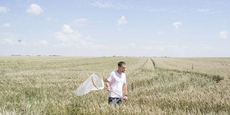 Agriculture : et si on produisait plus avec moins de pesticides et d'engrais | ECONOMIES LOCALES VIVANTES | Scoop.it