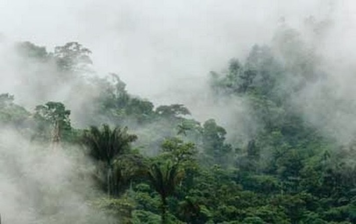 Rainforests in Far East shaped by humans for the last 11,000 years | The Archaeology News Network | Kiosque du monde : Asie | Scoop.it
