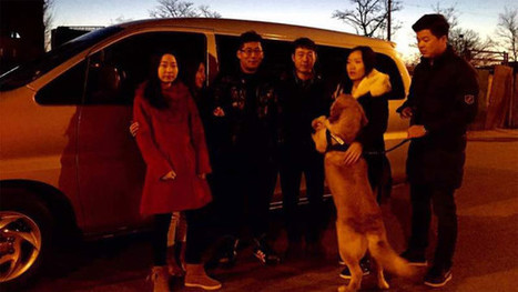 Driving home for Chinese new year — in a shared car - FT.com | Peer2Politics | Scoop.it