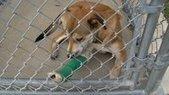 Volunteers Help Displaced and Injured Animals - WSIL TV | Petcare | Scoop.it
