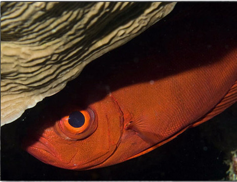 Underwater Photography: Everything You Need to Know | The ... | underwater pictures | Scoop.it