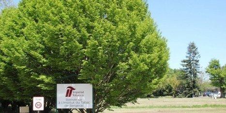 Bergerac : 28 emplois supprimés avec la fermeture de l'Institut du tabac | Agriculture en Dordogne | Scoop.it
