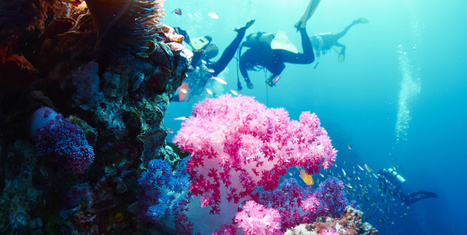 Top Tips for Environmentally Conscious Divers • Scuba Diver Life | DiverSync | Scoop.it