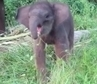 You'll Laugh Watching This Adorable Baby Elephant Learn to Use Her Trunk (VIDEO) | Practics | Scoop.it