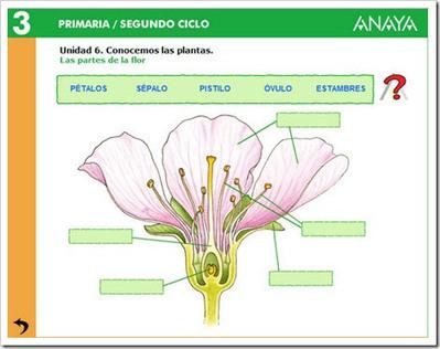 tema 1: reproducción plantas - conocimiento del medio 6º | Conocimiento del Medio | Scoop.it