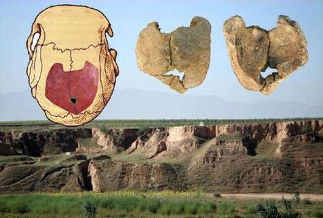 Inbreeding Common Practice Based On Ancient Human Skull - Science News - redOrbit | Ancient Origins of Science | Scoop.it