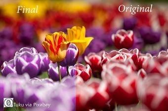 How to Change Colors in Photoshop Elements | Photoshop Elements Tutorials | Scoop.it