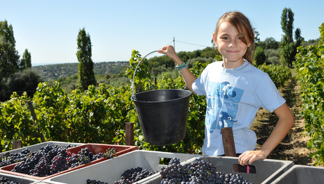 Devenez apprenti vigneron le temps des vendanges 2012 | Wine & Web | Scoop.it