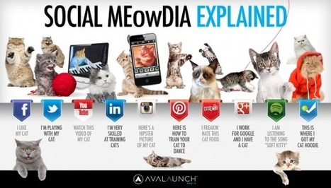 Social Media Explained By Adorable Cats [Graphic] - SocialTimes   Digital-News on Scoop.it today   Scoop.it