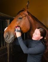 » Will Volunteering Improve Your Mental State? - Equine Therapy | Neuro-Minded | Scoop.it