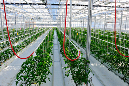 Office Buildings Add Cash Crops To Their Balance Sheet | thefuture | Scoop.it