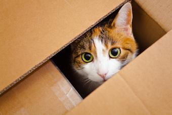 How fat is Schrödinger's cat? - physicsworld.com | Philosophical wanderings | Scoop.it