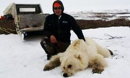 Pizzly or grolar bear: grizzly-polar hybrid is a new result of climate change | Oceans and Wildlife | Scoop.it