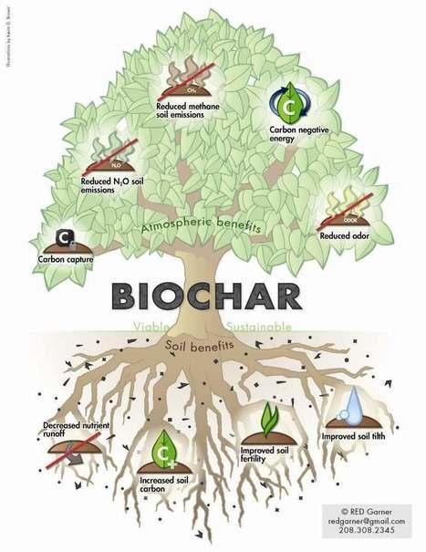 What Is Biochar?   International Biochar Initiative   Think Like a Permaculturist   Scoop.it
