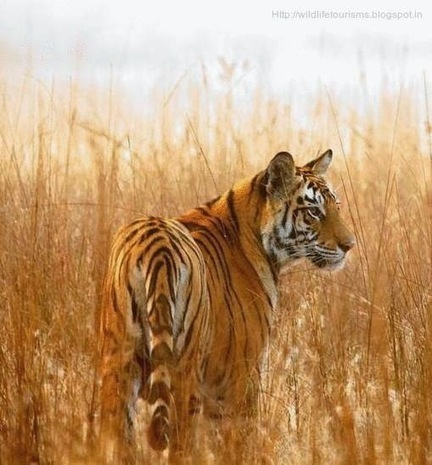 Sundarbans National Park and Wildlife Sanctuary in West Bengal   computer hardware and networking course   Scoop.it