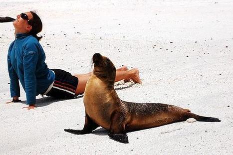 20 állat, ami jógázni tanul   Jóga   Scoop.it